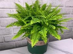 蚌埠办公室绿植盆栽养护公司