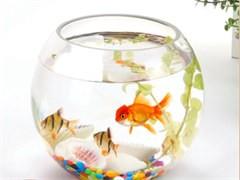 定做鱼缸海鲜贝类缸移动式海鲜池生鲜超市饭店水产鱼缸