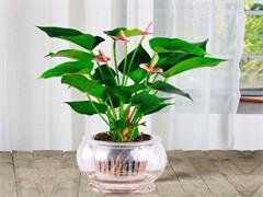 杭州蕭山京綠植租售花卉租擺室內外綠化花木批發
