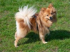 随州本犬舍出售品相好的狗狗,支持全国发货,也可以视频挑选