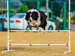 杭州蕭山較好的寵物訓練學校