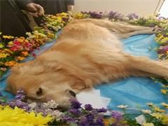 杭州市內寵物殯葬 提供專車接送