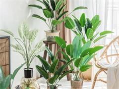 漳州办公室植物盆栽出租公司