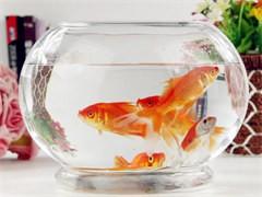 有優惠專業魚缸搬家魚缸清洗魚缸維護就要找較專業的