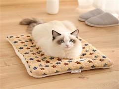 猫砂盆,除臭剂,专用碗,饮水器,猫垫子,逗猫棒,老鼠玩具
