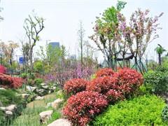 15年绿化师傅 农户价 提供别墅绿化,工厂绿化,边坡种草