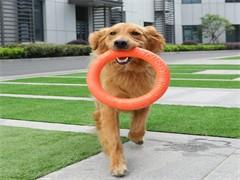 中國人民解放軍軍犬基地轉業軍犬訓犬師