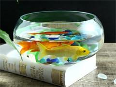 魚缸定做生態雨淋缸水陸缸造景