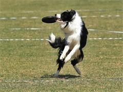 宠物专业训练学校 金牌宠物培训学校