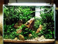鱼缸定做,鱼缸清洗,鱼缸维护,观赏鱼