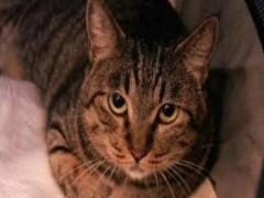 懷化萌寵雙色布偶貓 身體健康活潑可愛 品質有保障