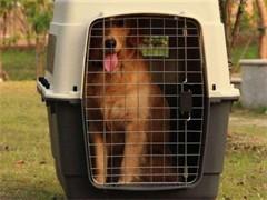 新野宠物保姆专车护送