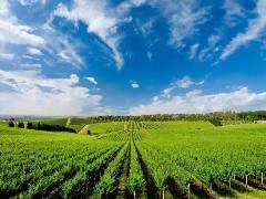 重症耐药性大肠杆菌防治专家-氟加盟 种植养殖