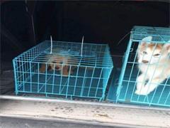 黄石国内国际宠物托运公司 宠物专项托运业务 诚信服务靠谱