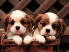 长期接受狗狗寄养