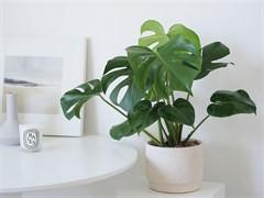 漳州办公室植物出租公司