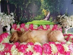 24小時寵物火化寵物殯葬價格面議
