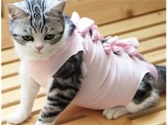 猫舍出售俄罗斯蓝猫健康包活可预定可签协议合同价格合理