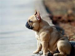 求领养一只宠物狗或者猫猫都行,很喜欢,会对它好的 但是没钱买