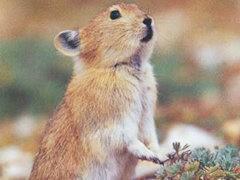 隴南徽縣種兔的養殖新西蘭種兔電話議價