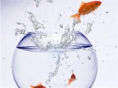 全新金晶超白鱼缸