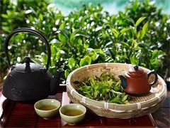 深圳光明新区网红奶茶店原料设备里有卖