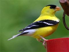 赤峰鸵鸟苗活鸵鸟幼崽