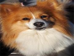 火爆热销七折超值 出售纯种健康宠物狗 品种齐全可送货上门