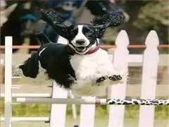 长沙狗狗训练学校 长沙训犬基地 长沙训狗基地