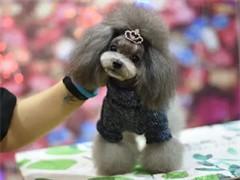 招聘宠物美容师