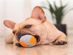 成都專業寵物訓練學校,承接寵物犬、工作犬訓練