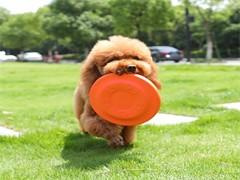 长沙多乐训犬俱乐部 多乐训犬学校