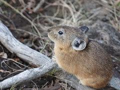 张掖山丹散养新西兰种兔成年活体种兔直销新西兰种兔批发报价