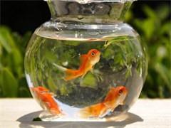 海鮮缸定做飯店魚缸酒店海鮮缸魚缸定制