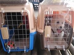 华安宠物托运活体专车运输,免费接送安全保障