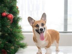 宠物寄养 训练狗狗,小型犬20/天,大型犬60/天