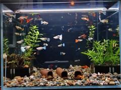 杭州蕭山各地全新魚缸價格面議