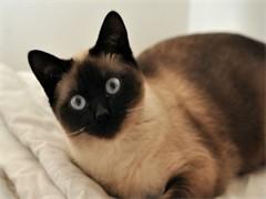 喀什加菲貓貓舍地址 加菲貓電話