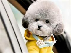里能买到家养泰迪犬便宜的钱