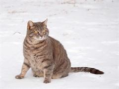 美短貓咪找家了 特價出