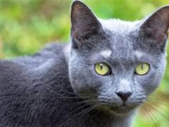 宣城靠谱猫舍出售各类猫咪