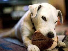 狗狗大小便训练
