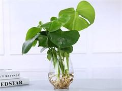 訂綠植速遞配送開業花籃訂花開張花籃發財樹綠蘿盆栽花