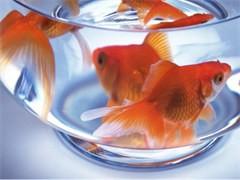 鱼缸水族箱定制 亚克力鱼缸订做 玻璃鱼缸海鲜池定做