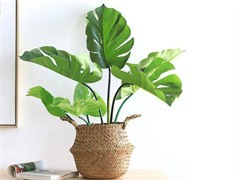 威海公司植物盆栽租赁公司