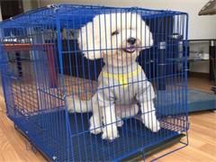 黄石港全国宠物托运,免费接送专人护理