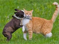家庭宠物专业寄养