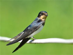 西安鸵鸟苗 量大优惠 全国包邮 欢迎来电咨询