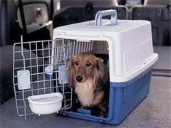 恩施到漳州宠物托运照料喂食点击查询详情
