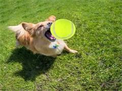 文登贵族宠物.十个品种的狗狗欢迎到狗舍挑选参观